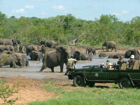 South Africa Safari, Safari in South Africa